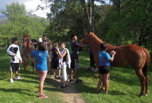 Petting horses on the waterfall hike